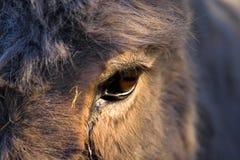 A donkeys eye Stock Image