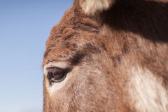 Donkeys eye Stock Photo