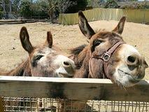 Donkeys in a farm Stock Photos