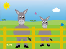 Donkeys in a field. Cute  of donkeys in a field in the spring Stock Photography