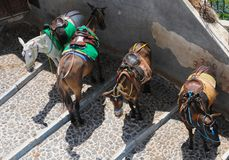 Donkeys at Fira, Santorini Stock Photography