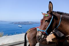 Donkeys in Fira on the Santorini island, Greece. They are a local symbol and take people, tourists to the port down the cliff Stock Photo