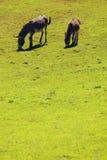 Donkeys free grazing Stock Photo