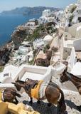 Donkeys going downhil in Santorini Stock Photos