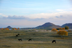 Donkeys grazing on the prairie in autumn Royalty Free Stock Photo