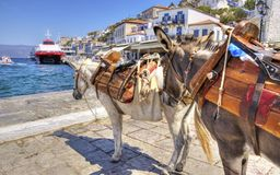 Donkeys on Greek island. Two donkeys on the Greek island, Hydra. They are the only means of transport on the island, no cars are allowed Royalty Free Stock Images