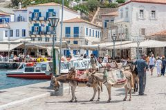 Donkeys at Greek island Hydra. Hydra, Greece - May 30, 2009: Hydra is a Greek island in the Aegean sea belonging to the Saronic islands. Motor vehicles are not Royalty Free Stock Image
