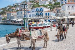 Donkeys at Greek island Hydra. Hydra, Greece - May 30, 2009: Hydra is a Greek island in the Aegean sea belonging to the Saronic islands. Motor vehicles are not Royalty Free Stock Photos
