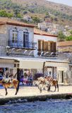 Donkeys on Greek island. Donkeys at the Greek island, Hydra. They are the only means of transport on the island, no cars are allowed. On the background a view of Stock Photography