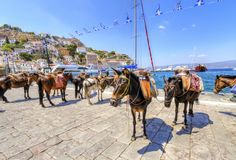 Donkeys on Greek island. Donkeys at the port of the Greek island, Hydra. They are the only means of transport on the island, no cars are allowed Stock Photo
