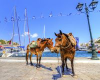Donkeys on Greek island. Two donkeys at the Greek island, Hydra. They are the only means of transport on the island, no cars are allowed Stock Photos