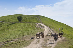 Donkeys on a hill Stock Images