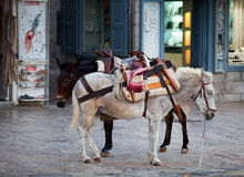 Donkeys on Hydra in Greece stock image