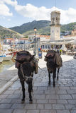 Donkeys in Hydra, Greece Royalty Free Stock Photos