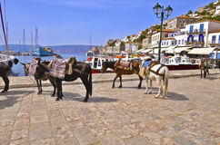 Donkeys at Hydra island Greece Stock Photography
