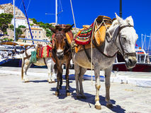 donkeys in Hydra island, Greece Stock Image