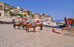 Donkeys at Hydra island Saronic Gulf Greece Royalty Free Stock Photos