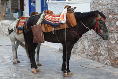 Donkeys on hydra Stock Photos