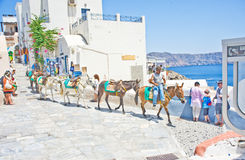 Donkeys at Ia on Santorini. Stock Photo