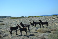 Donkeys in Karpaz Stock Photo