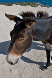 Donkeys in Karpaz Stock Photography