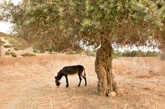 Donkeys in Karpaz Stock Photo