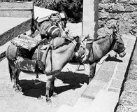 Donkeys At Lindos. A group of donkeys waiting to carry tourists up a hill in the town of Lindos on the island of Rhodes in Greece. (Scanned from black and white Royalty Free Stock Photography