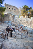 Donkeys in Lindos on the Rhodos island, Greece. Stock Photo