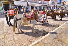 Donkeys the means of transport at Hydra island Greece Stock Images