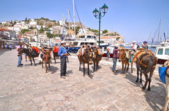 Donkeys the means of transport at Hydra island Saronic Gulf Greece Royalty Free Stock Images