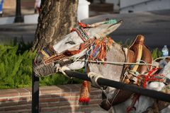 Donkeys in Mijas. Andalusia, Spain. Royalty Free Stock Image