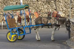 Donkeys in Mijas. Andalusia, Spain. Royalty Free Stock Images