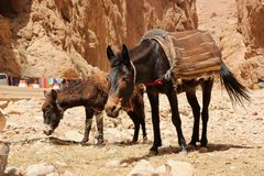 Donkeys Stock Photography