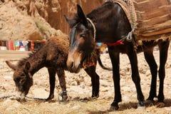 Donkeys Stock Images