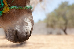 Donkeys mouth Royalty Free Stock Images