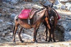 Donkeys near the rock royalty free stock photo