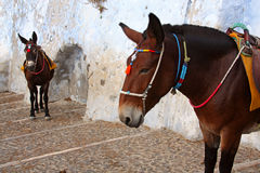 Donkeys in old mediterranean city Stock Image