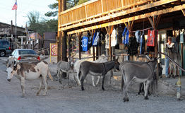 Donkeys in Old Mining Town Royalty Free Stock Image