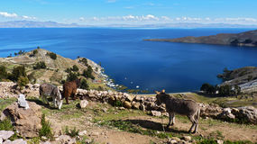 Donkeys` paradise Stock Photos