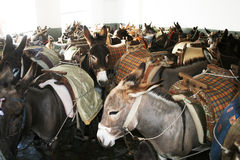 Donkeys parking Stock Images