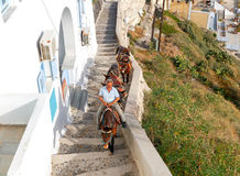 Donkeys for riding in the city Fira. Royalty Free Stock Image