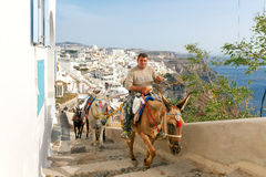 Donkeys for riding in the city Fira. Royalty Free Stock Photography