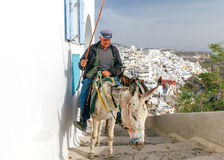 Donkeys for riding in the city Fira. Stock Image