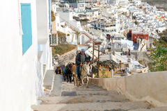 Donkeys for riding in the city Fira. Stock Images