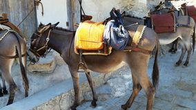 Donkeys with saddles stand in the city of Lindos. The Island Of. Rhodes. Greece royalty free stock photo