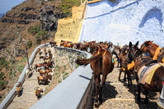 Donkeys from Santorini Royalty Free Stock Photos