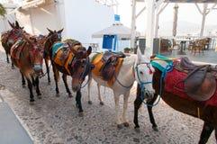 Donkeys. On Santorini island, Greece Royalty Free Stock Image