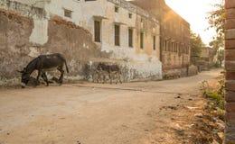 Donkeys on street of Mandawa city Royalty Free Stock Image