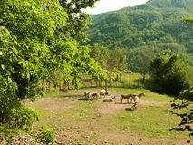 Donkeys in the sun Royalty Free Stock Image