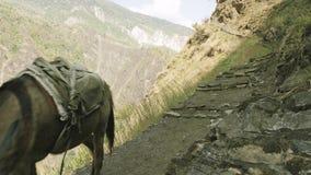 Donkeys transport cargoes on the nepalese path. Manaslu mountain circuit trek.